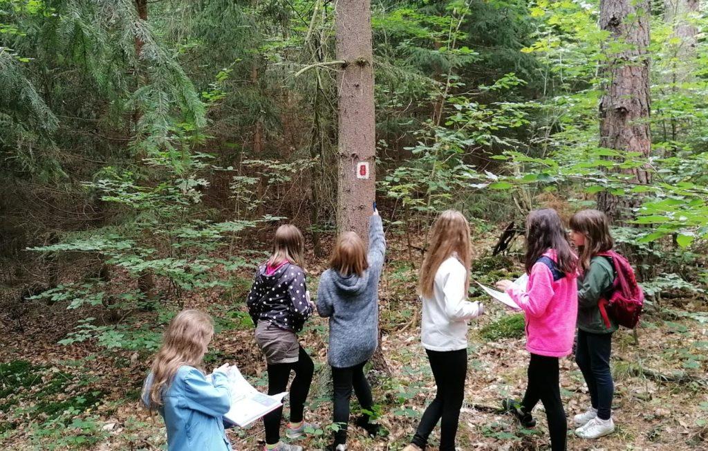 Tagesveranstaltung Wald